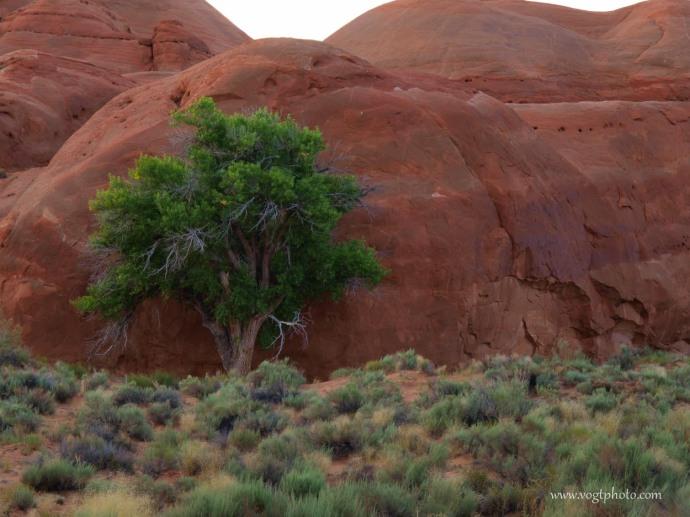 20100708-Desert Survivor-01-w