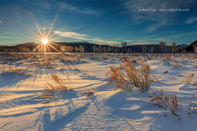 20140117-Jackson Hole Winter Grass - w